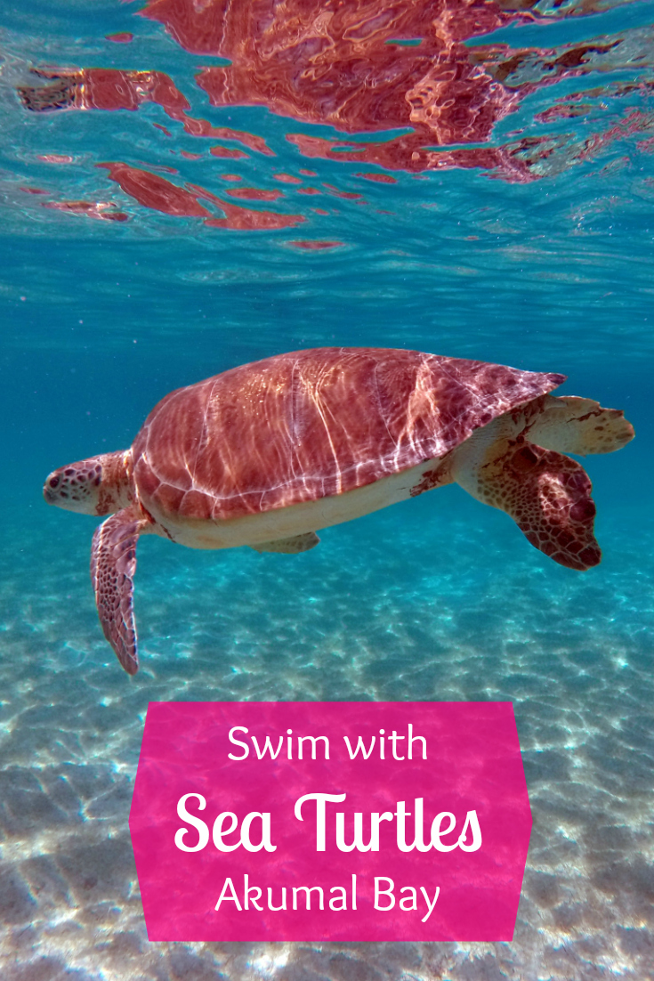 Swim with Sea Turtles in Akumal - Wanderalot