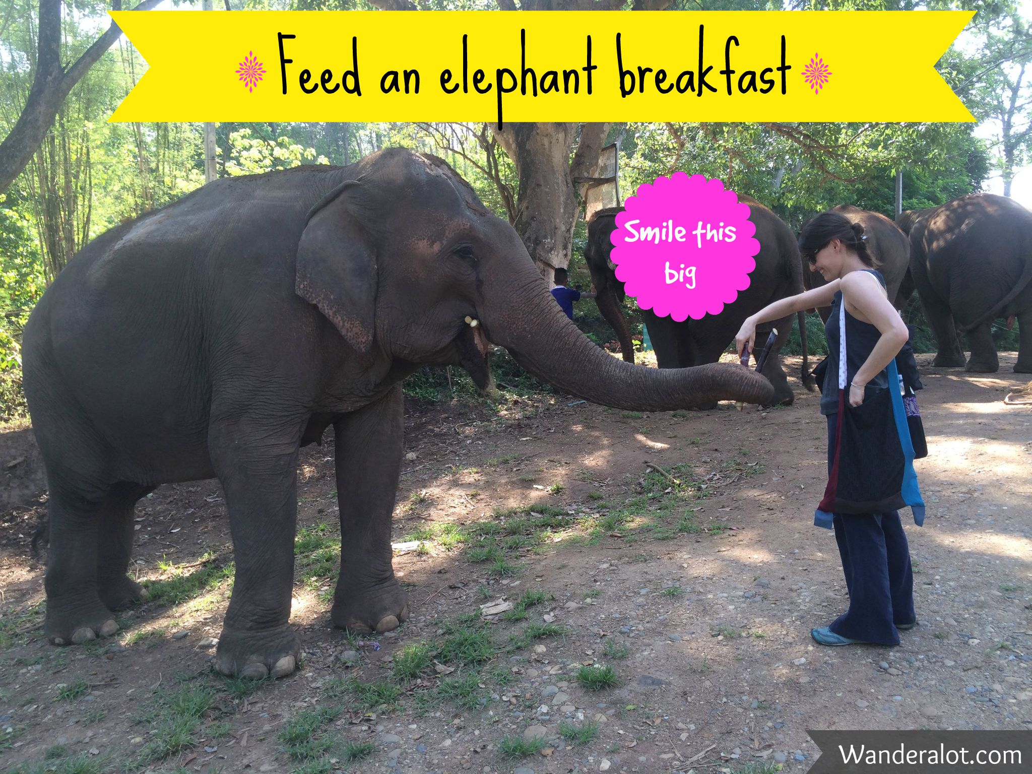 elephant breakfast