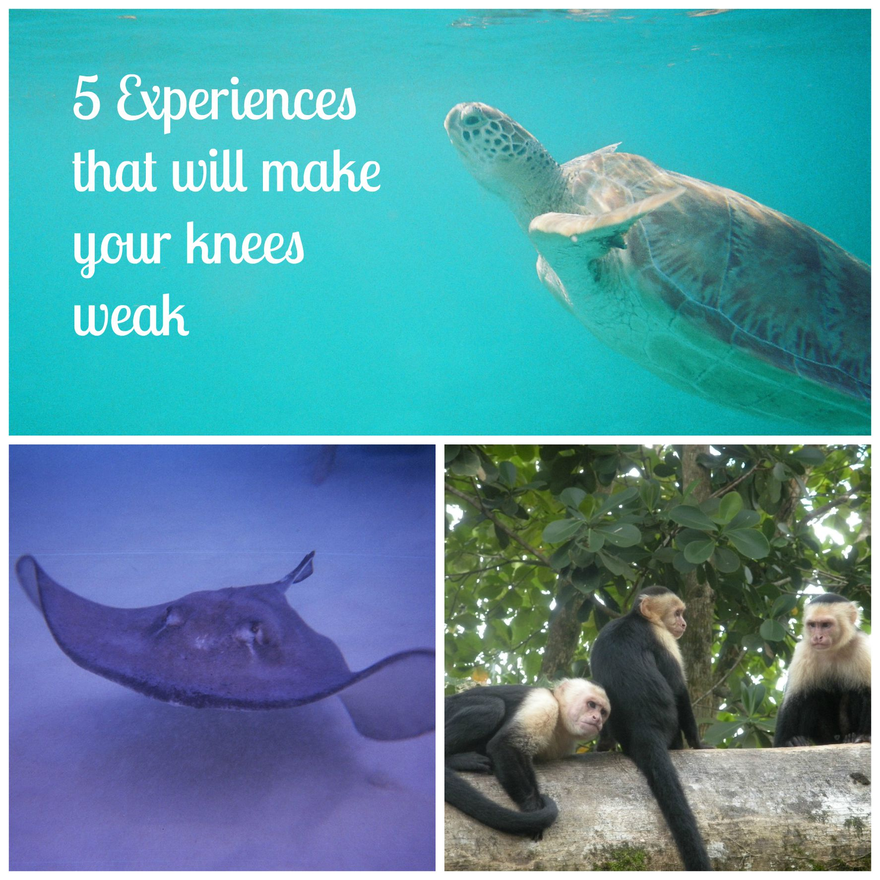 Five experiences that will make your knees weak