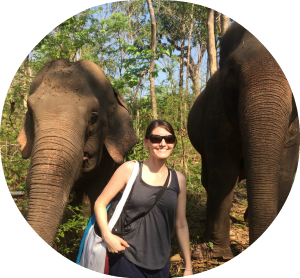 elephants in thailand - wanderalot