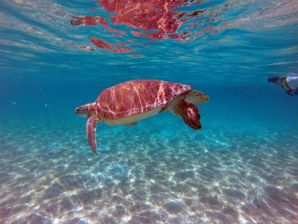 Wanderalot - Swimming with Sea Turtles in Akumal Bay
