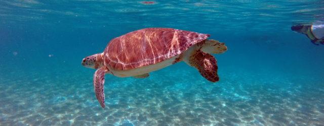 Wanderalot - Swimming with Sea Turtles in Akumal Bay
