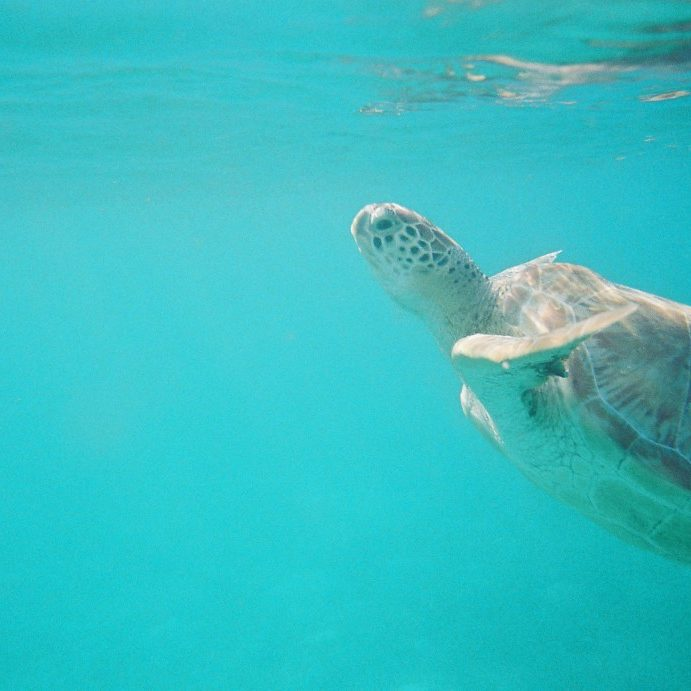 wanderalot.com Swim with Sea Turtles